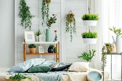 Decorar con plantas energéticas